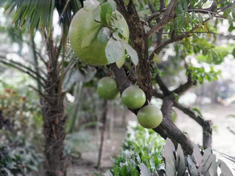 Organic farming at Vedic Village